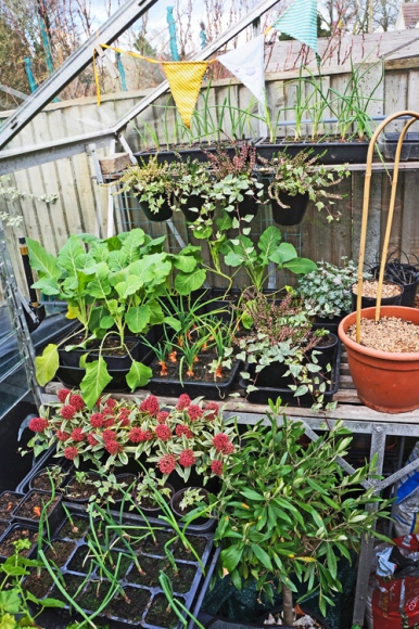 Greenhouse looking quite active for February.