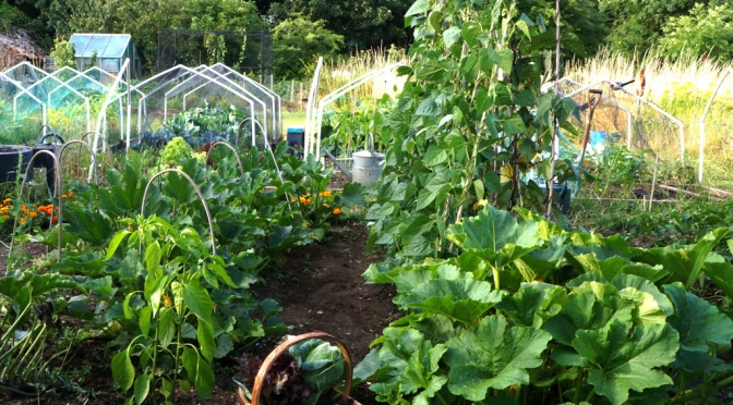 Start a new veg bed from scratch