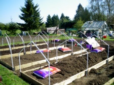 Building the raised beds