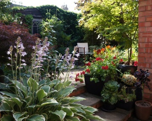 hosta and chair