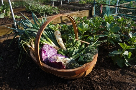Its now March 2014 and its the last leeks, parsnips and red cabbage. Broccoli and spinach is still going. And at last the spring onions! They took ages to grow.