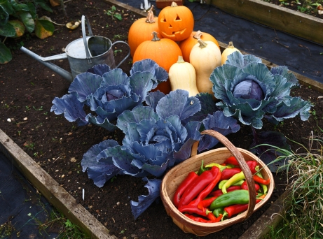 Pumpkines. red cabbages an trug filled with red peppers