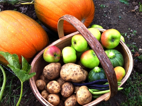 Potatoes and apples in the trug next to pumpkins