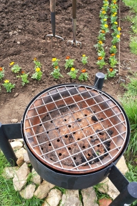 Marigolds and fire pit
