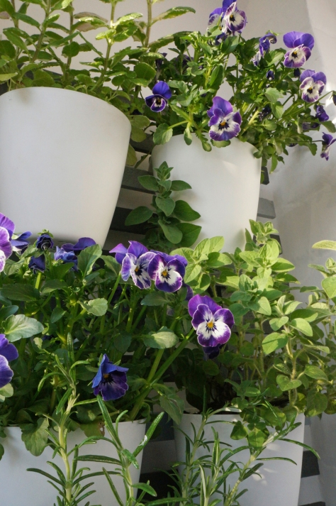 Pretty purple pansies greet you at the front door
