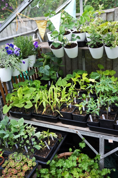 Busy in the greenhouse.