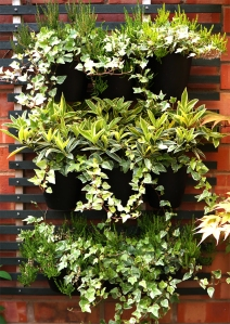 The green wall planting. Winter plants on their summer holidays.