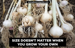 Size doesnt matter garlic poster