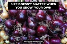 Size doesnt matter onion poster