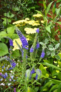 Blue Veronica against pale yellow Achilles.