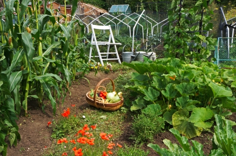 Allotment August 2014