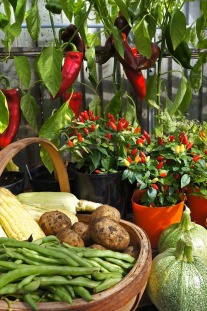 Lots of brightly coloured veg