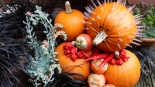 Pumpkin hog header