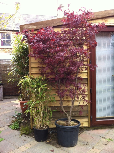 Worth spending the extra cash on a larger one.