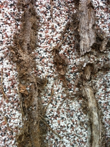 Eeek! The ivy roots have taken hold.