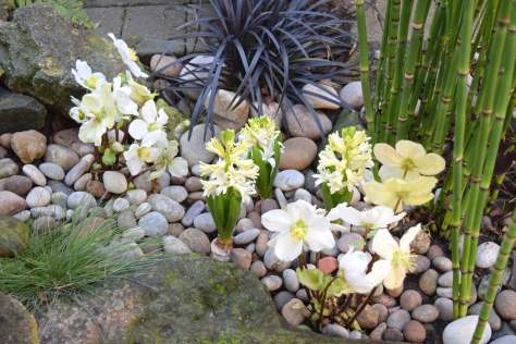Dry riverbed theme has fluffy hyacinths in bloom now.