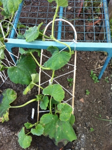 A bit of improvisation with string and bamboo for the squash ladder.