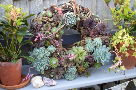 My pretty wreath flowering away in June.