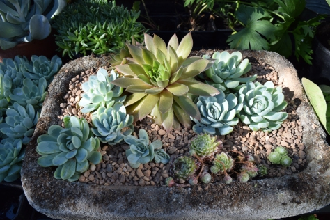A skip-find planted up with succulents.