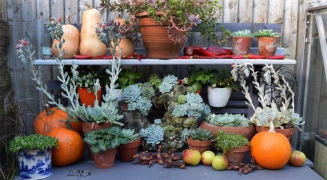 Hours of fun arranging this lot on the potting bench.