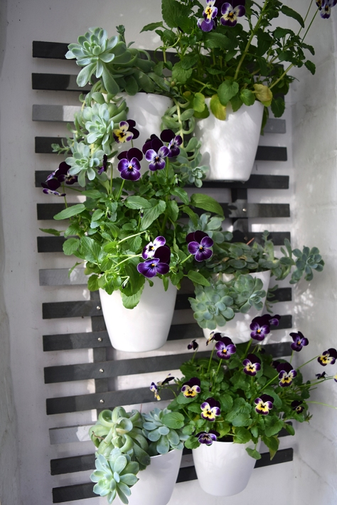 Pansies in the porch.