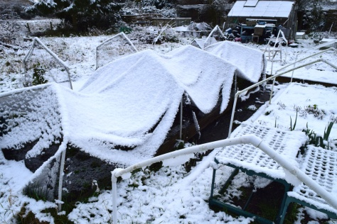 Snow on the nets do look amusing, like I've draped sheets over the broad beans.