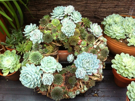 Succulent wreath one year later