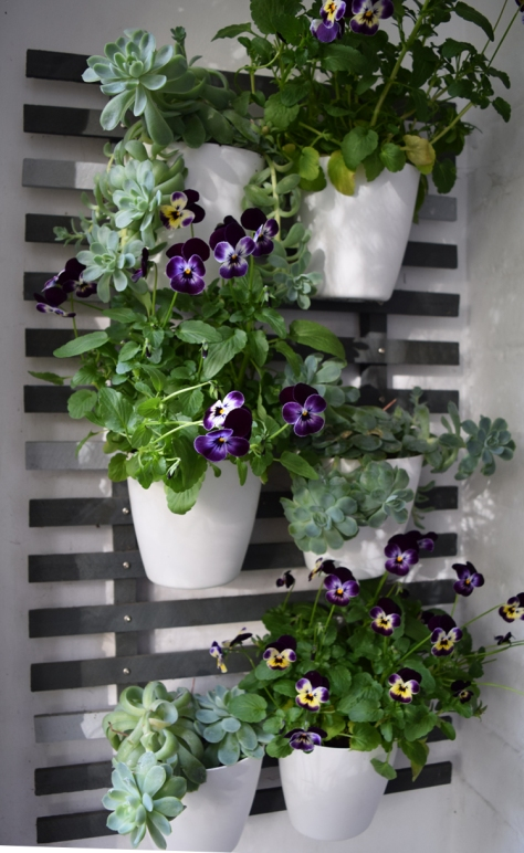 You can't go wrong with violas!