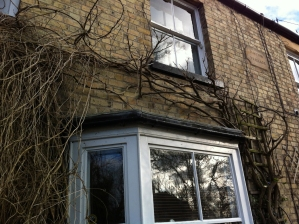 Not the most attractive photo but the wisteria is pruned.