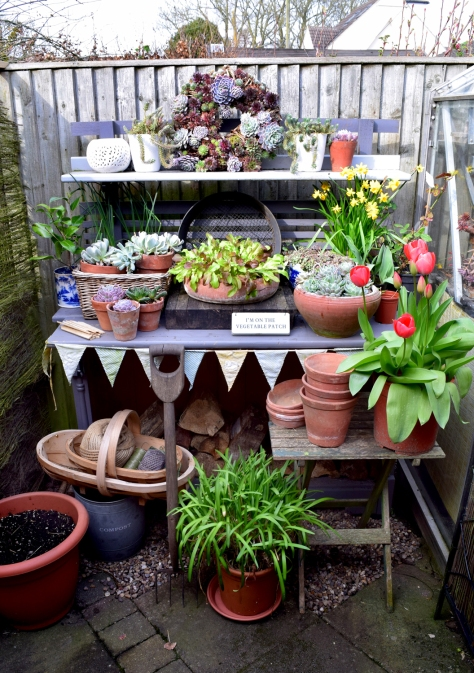 Upcycled from an old bookcase the potting bench is a useful holding bay for plants.