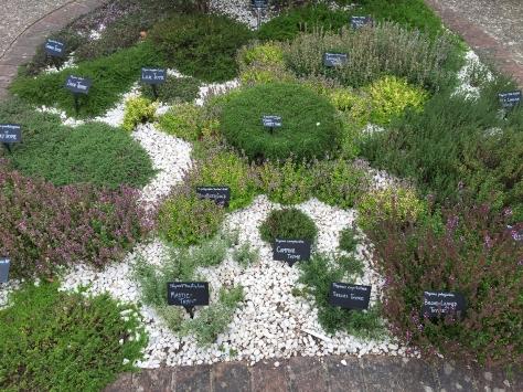 RHS Wisleys herbs